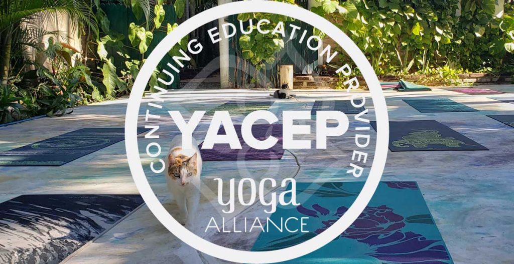 YACEP banner extra wide